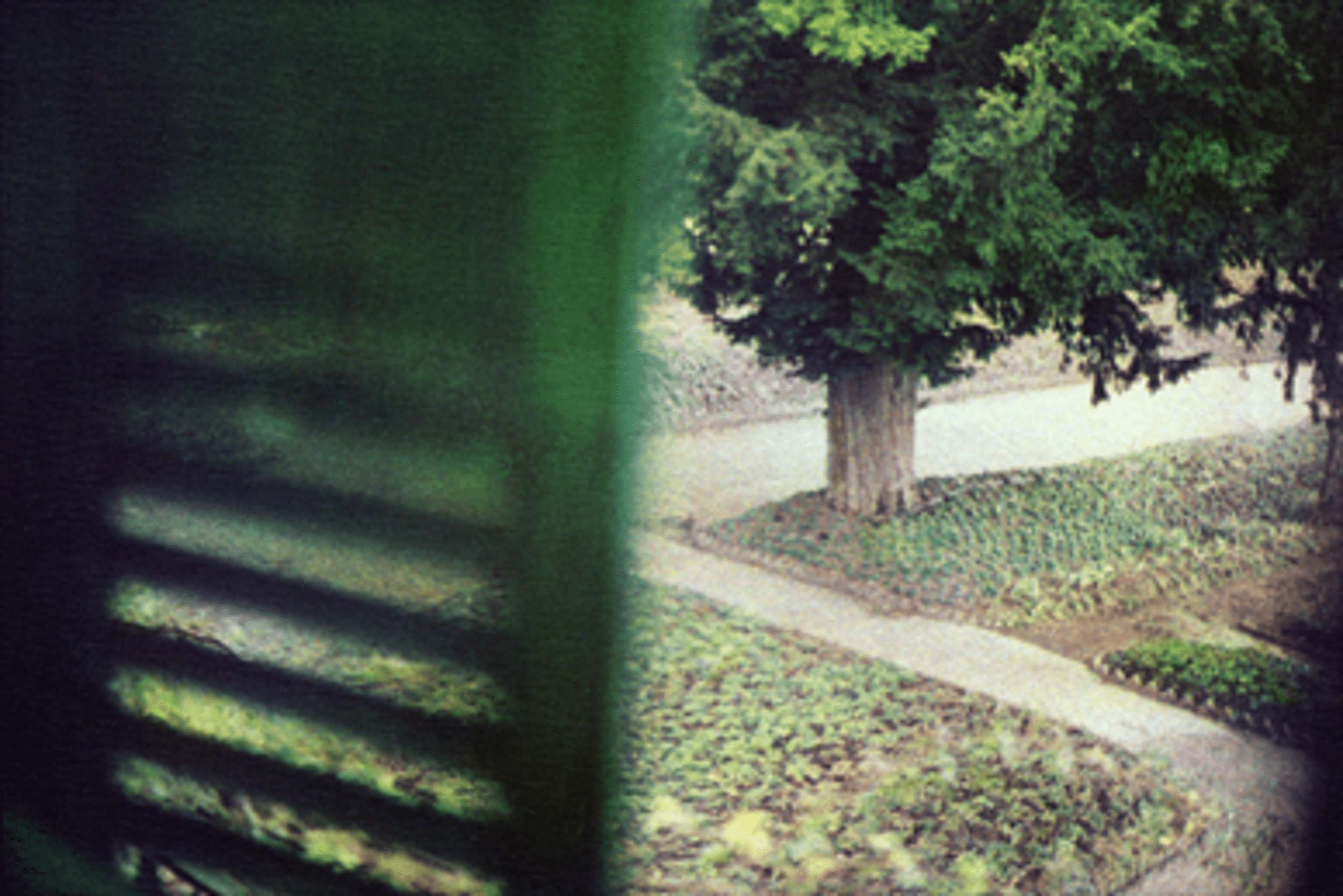 Bernard Plossu, Jardin vu de la chambre de Claude Monet, Giverny